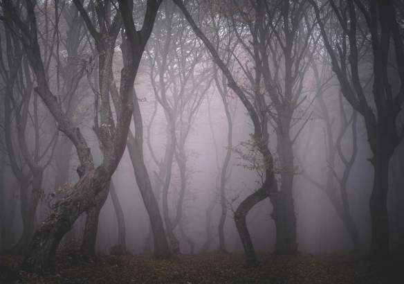 Bosc romanès d'Hoia Baciu